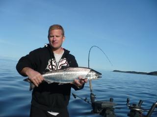 Spring Salmon