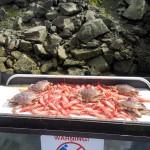 Crabs & Prawns