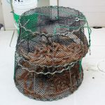 Full prawn traps Watermark Salmon Fishing Charters - Jan 2017